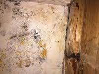 https://sites.google.com/a/progressenvironmental.com/www/Home/mold-testing/image.jpeg